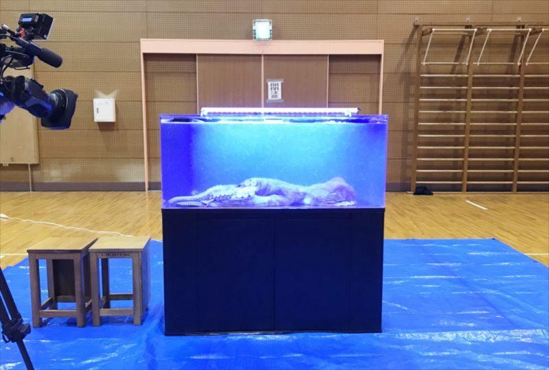 朝日放送テレビ『探偵ナイトスクープ』 タコ水槽を設置 水槽画像2