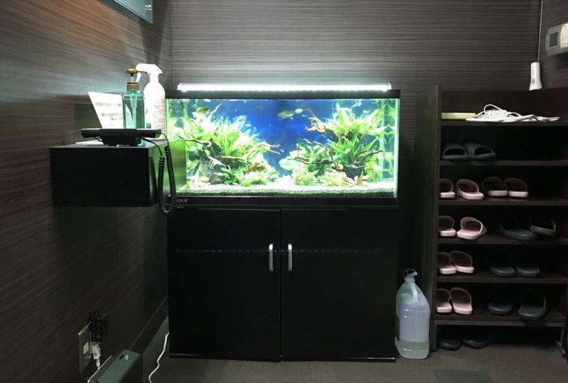 オフィス 90cm淡水魚水槽 リニューアル・メンテンナス事例 水槽画像2