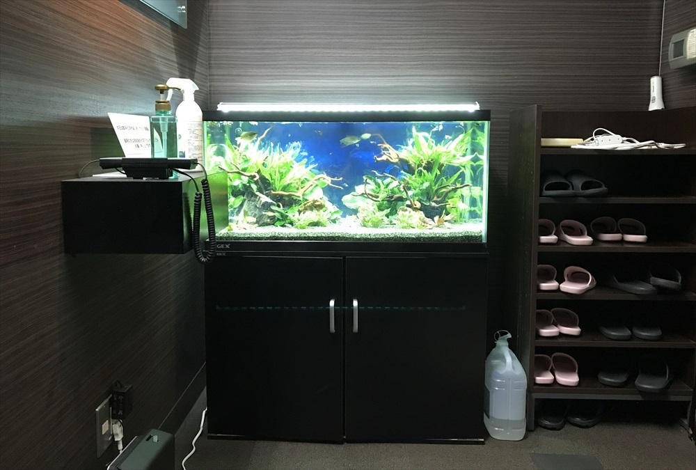オフィス事務所 90cm淡水魚水槽 リニューアル 全体画像
