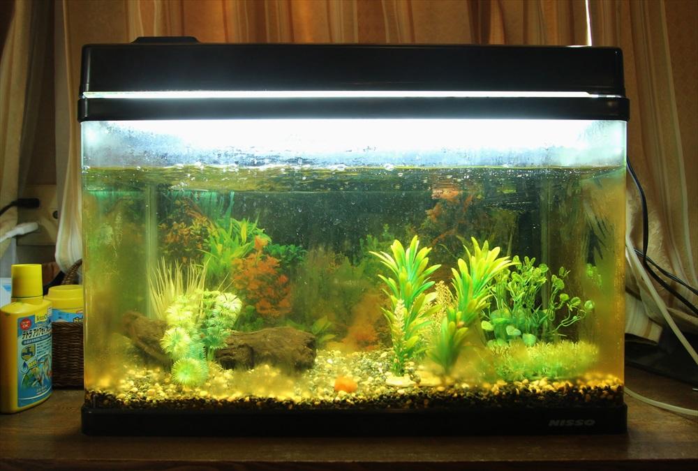 60cm淡水魚水槽 スポットメンテナンス 汚れ画像