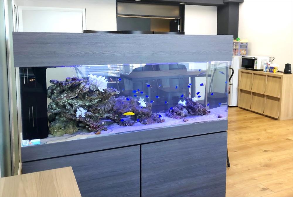 オフィス事務所 150cm海水魚水槽 斜めアップ画像