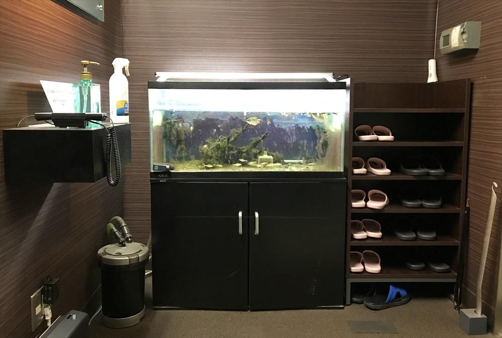 オフィス事務所 90cm淡水魚水槽 リニューアル コケ画像