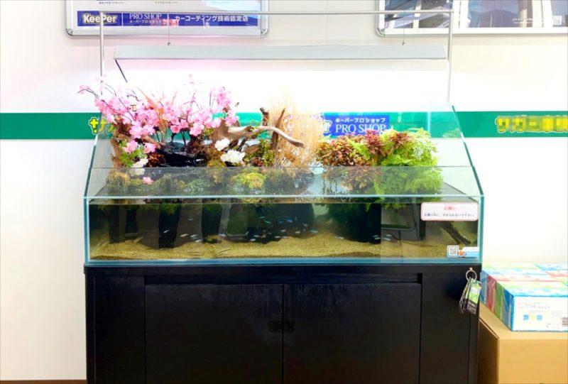 桜のレイアウト! 120cmアクアテラリウム水槽 水槽画像3