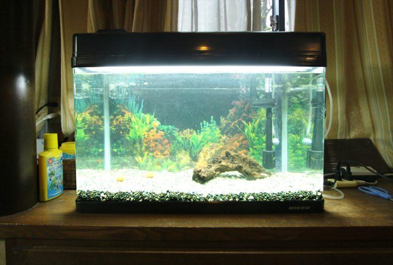杉並区個人宅 60cm淡水魚水槽 スポットメンテナンス事例 水槽画像3