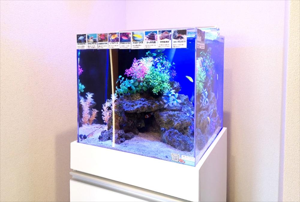 オフィス 受付 45cm海水魚水槽 斜め画像