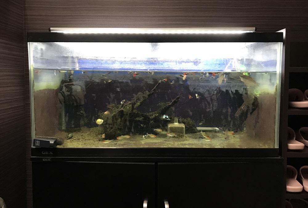 オフィス事務所 90cm淡水魚水槽 リニューアル レイアウト画像