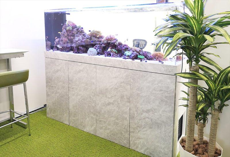 オフィス 大型サンゴ水槽 設置事例 その後 水槽画像4