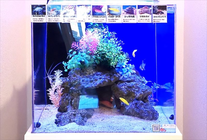 法務事務所 45cm海水魚水槽 設置事例 その後  水槽画像5