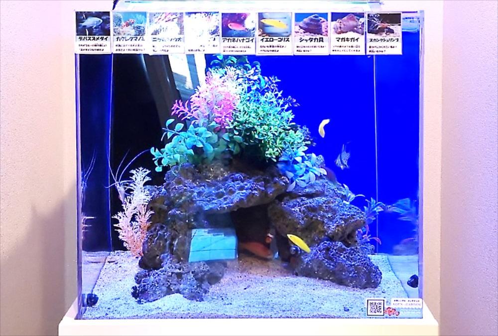 オフィス 受付 45cm海水魚水槽 正面アップ画像