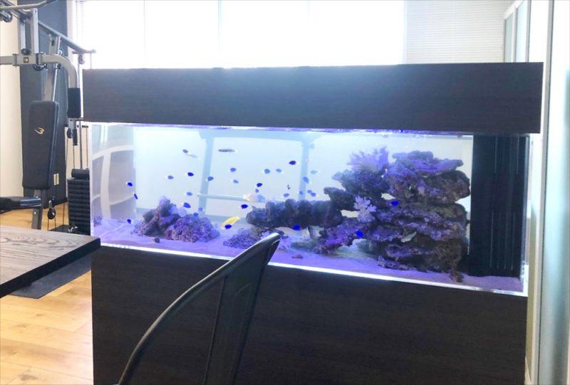 オフィス事務所 大型150cm海水魚水槽 設置事例 水槽画像5