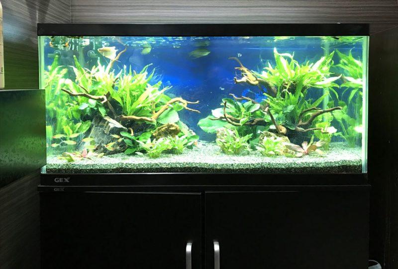 オフィス 90cm淡水魚水槽 リニューアル・メンテンナス事例 水槽画像4