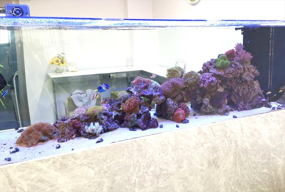 オフィス 大型サンゴ水槽 斜め画像