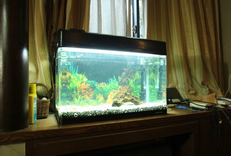 杉並区個人宅 60cm淡水魚水槽 スポットメンテナンス事例 水槽画像1