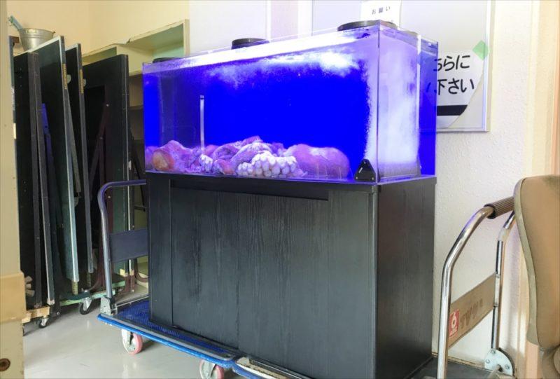 朝日放送テレビ『探偵ナイトスクープ』 タコ水槽を設置 水槽画像5