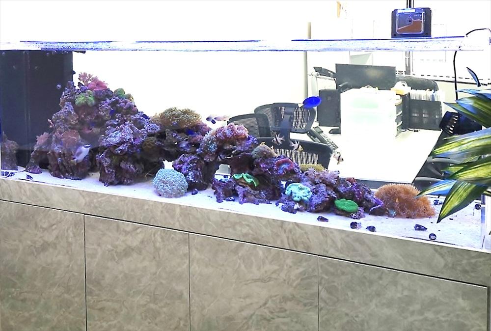 オフィス 大型サンゴ水槽 斜めアップ画像