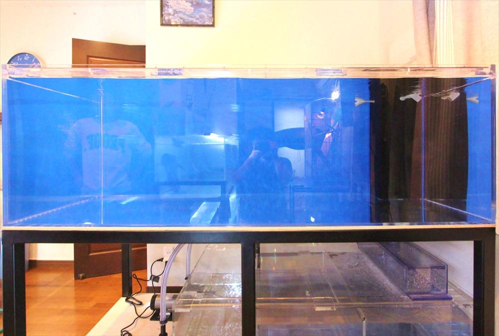 個人宅 アロワナ水槽 正面アップ画像