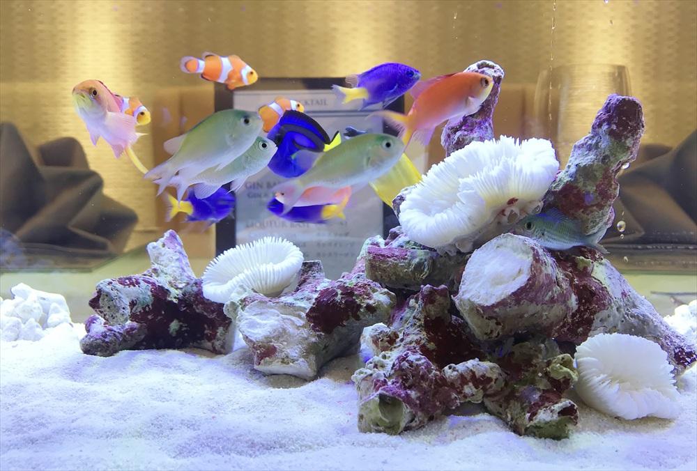 アクアリウムウェディング 海水魚水槽 生体画像