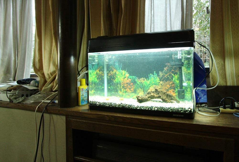 60cm淡水魚水槽 スポットメンテナンス 斜め画像