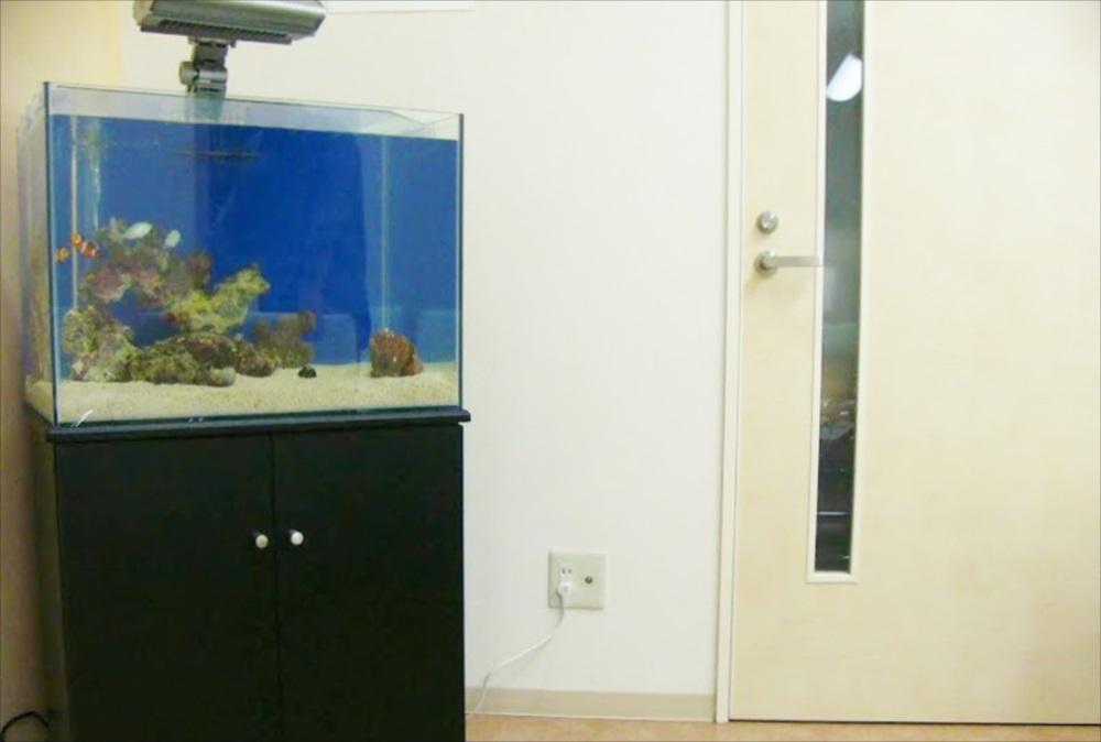 病院の待合室に60cm淡水水槽を設置しました メイン画像