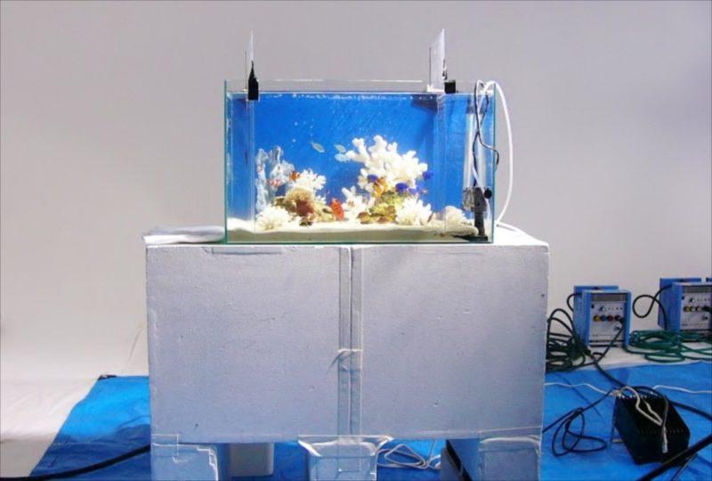 CM撮影の素材撮影協力 90cm海水魚水槽・淡水魚水槽等を設置 水槽画像3