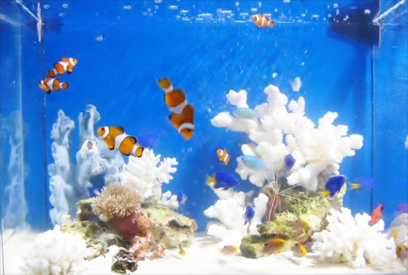 CM撮影の素材撮影協力 90cm海水魚水槽・淡水魚水槽等を設置 水槽画像4