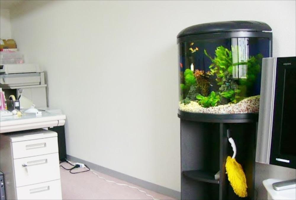 豊島区個人宅様に淡水ラウンド水槽を設置 メイン画像