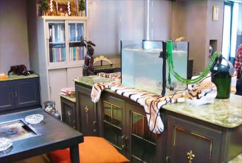 映画撮影の協力で複数の水槽を設置【フグ水槽編】 水槽画像1