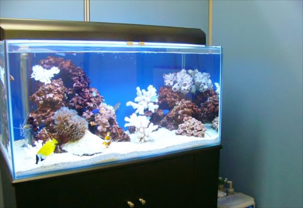 企業様のオフィスに90cm海水魚水槽を設置 メイン画像