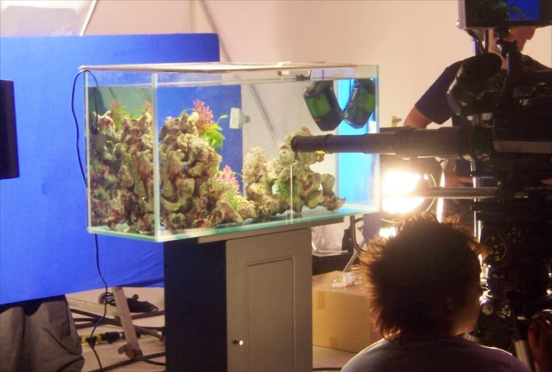 素材撮影現場に90cm海水魚水槽を設置 水槽画像2