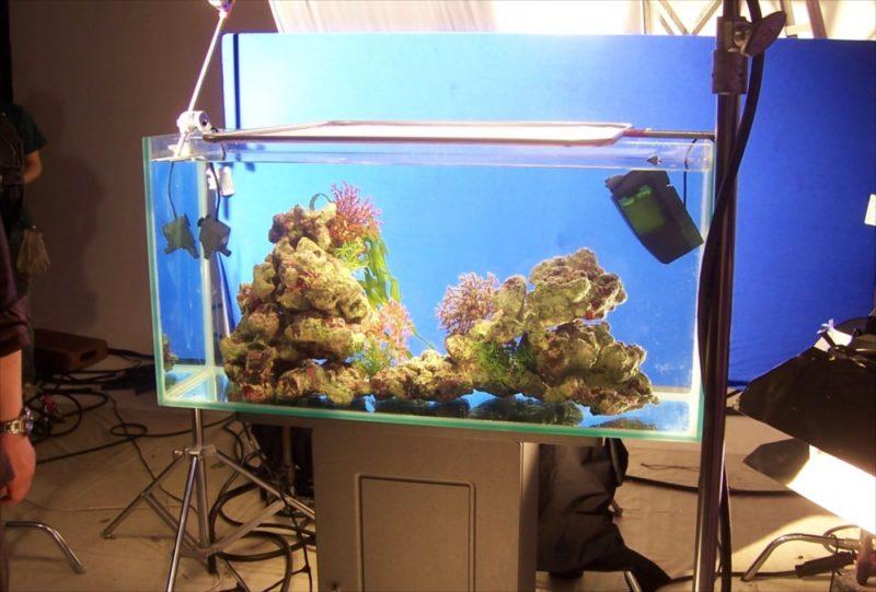 素材撮影現場に90cm海水魚水槽を設置 水槽画像1