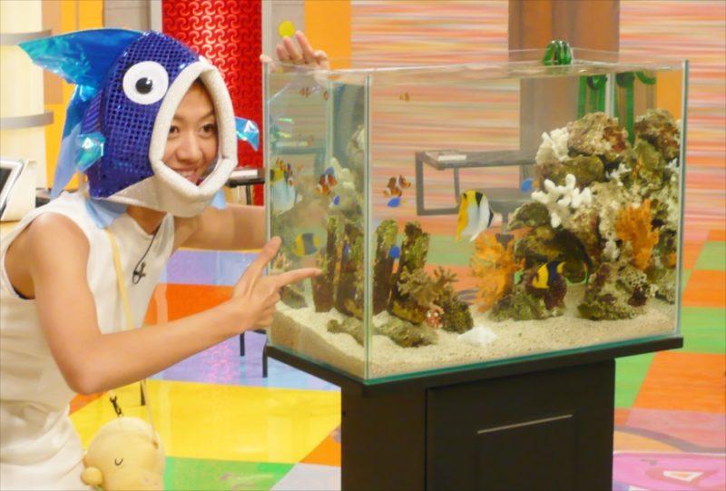 スタジオ撮影協力 60cm海水魚水槽を設置 水槽画像4
