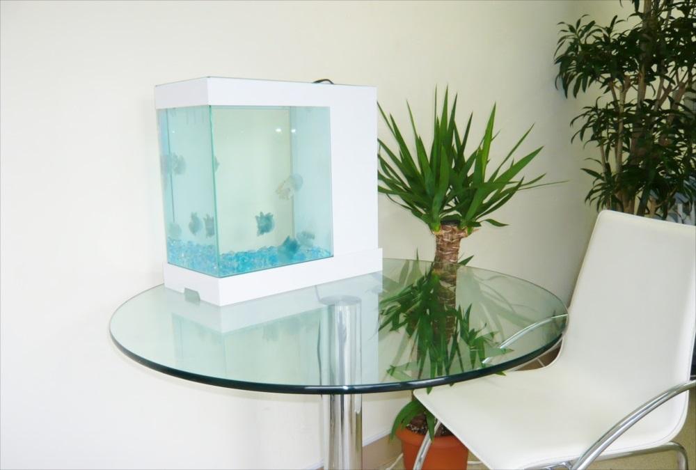 豊島区企業様にクラゲ水槽を設置しました メイン画像