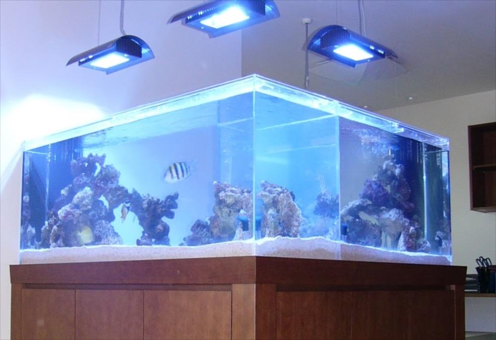 埼玉県個人宅様に水族館のような大型海水魚水槽を設置 メイン画像