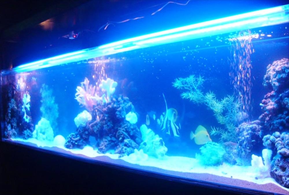 足立区飲食店様に200cm海水魚水槽を設置 水槽リース事例 メイン画像