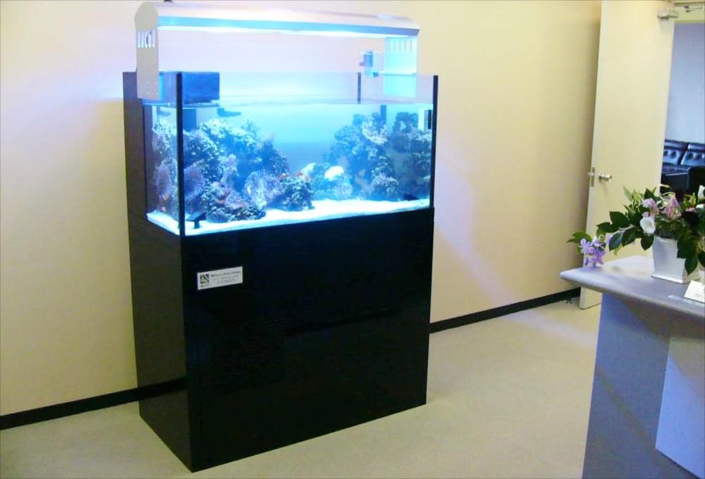 港区企業様に120cmサンゴ水槽を設置 メイン画像