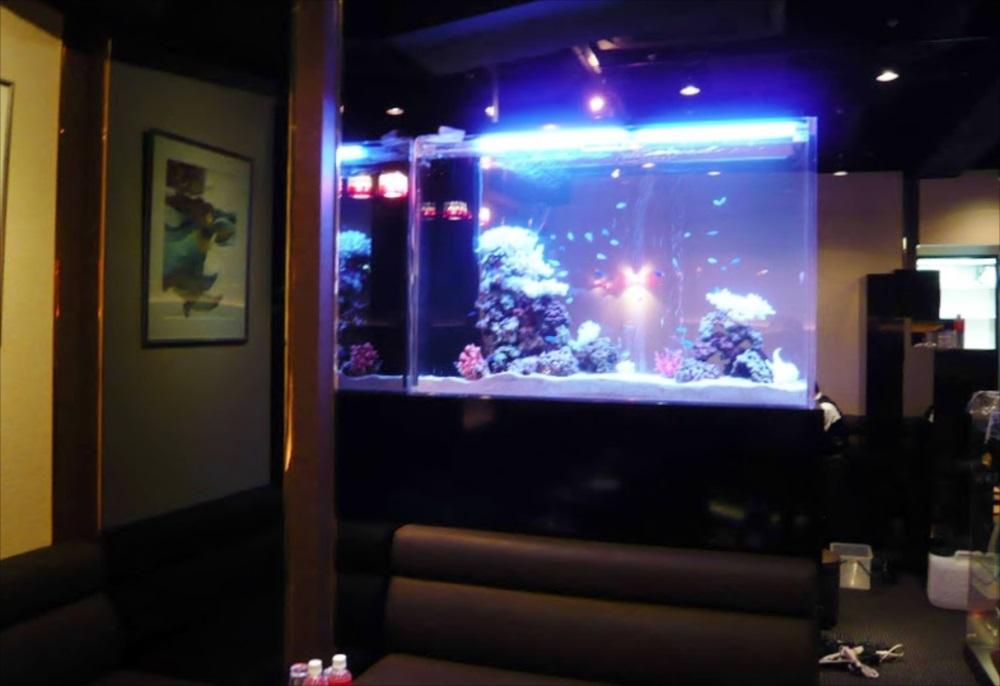 クラブ・カメリア様に150cm海水魚水槽を設置 メイン画像