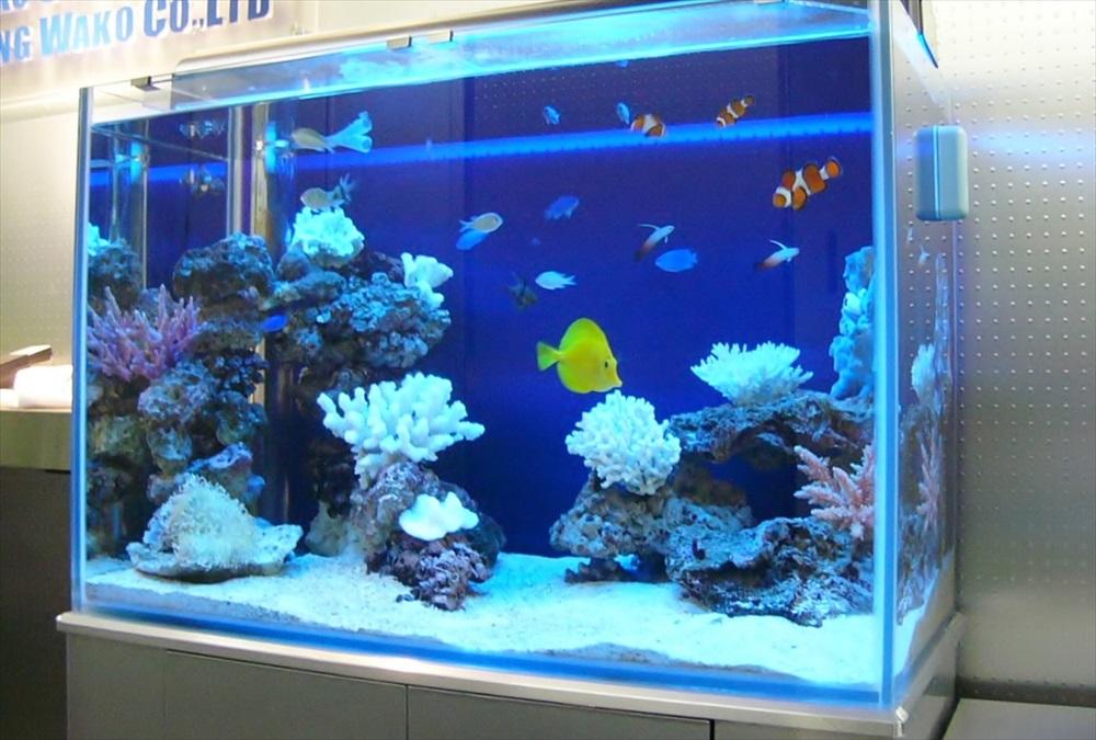 文京区企業様に90cm海水魚水槽を設置しました メイン画像