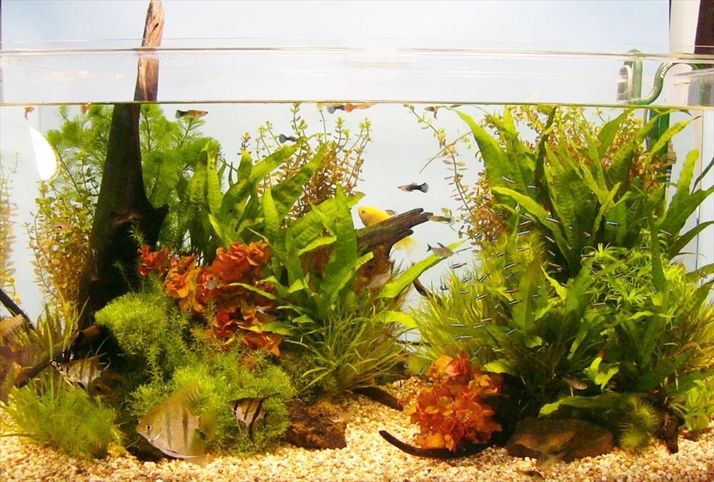 都内雑誌社に90cm淡水魚水槽を短期レンタルしました メイン画像