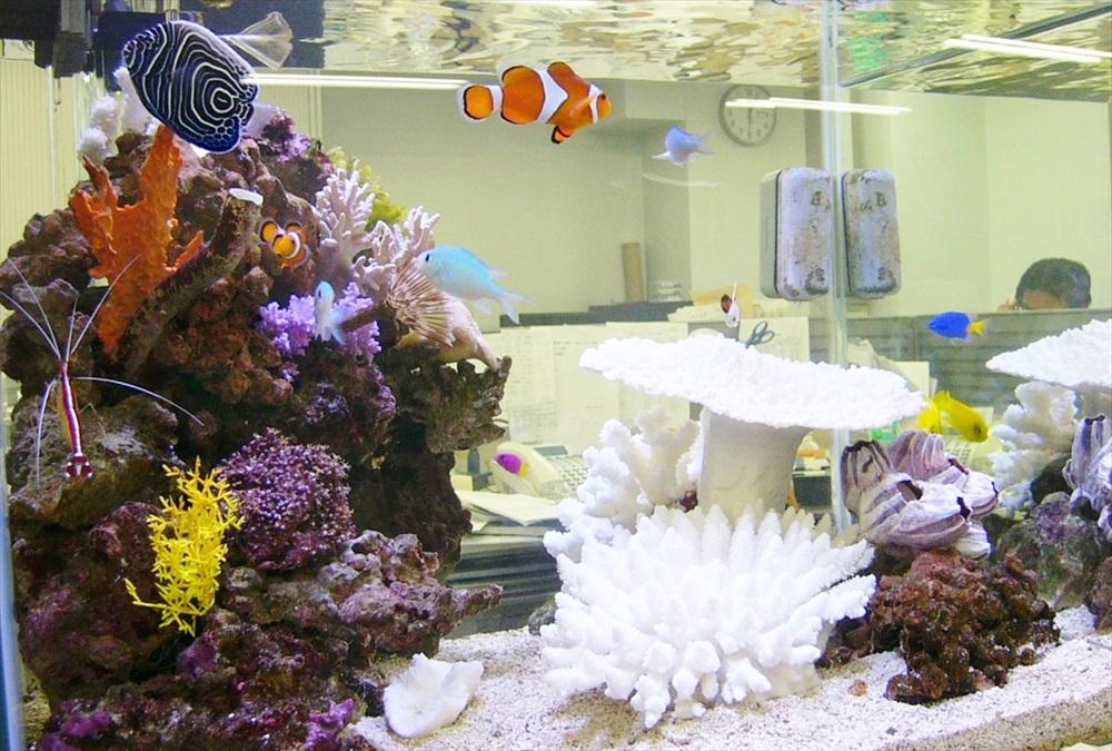 板橋区企業様に60cm海水魚水槽を設置しました メイン画像
