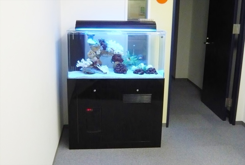渋谷区オフィス様に90cm海水魚水槽を設置しました メイン画像