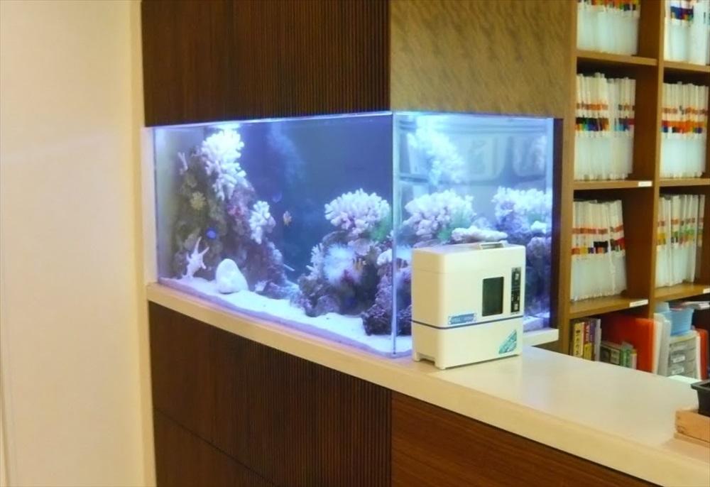 浦安市産婦人科様に150cm海水魚水槽を設置しました メイン画像