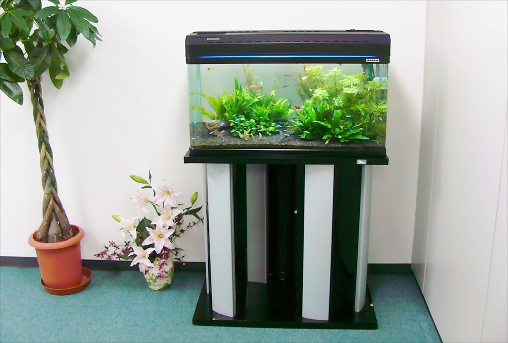 文京区オフィス様に60cm水草水槽を設置しました メイン画像