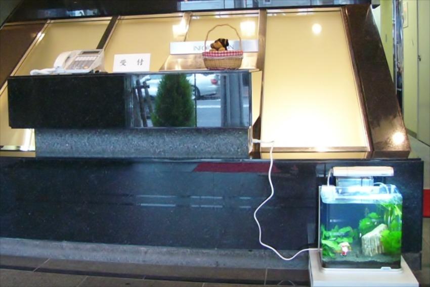 ニューロング機密工業様に30cm淡水水槽を設置しました メイン画像