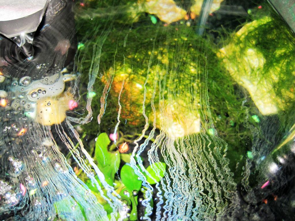 【完全版】油膜が水槽の水面に発生した!油膜の原因と対策方法とはのサムネイル画像