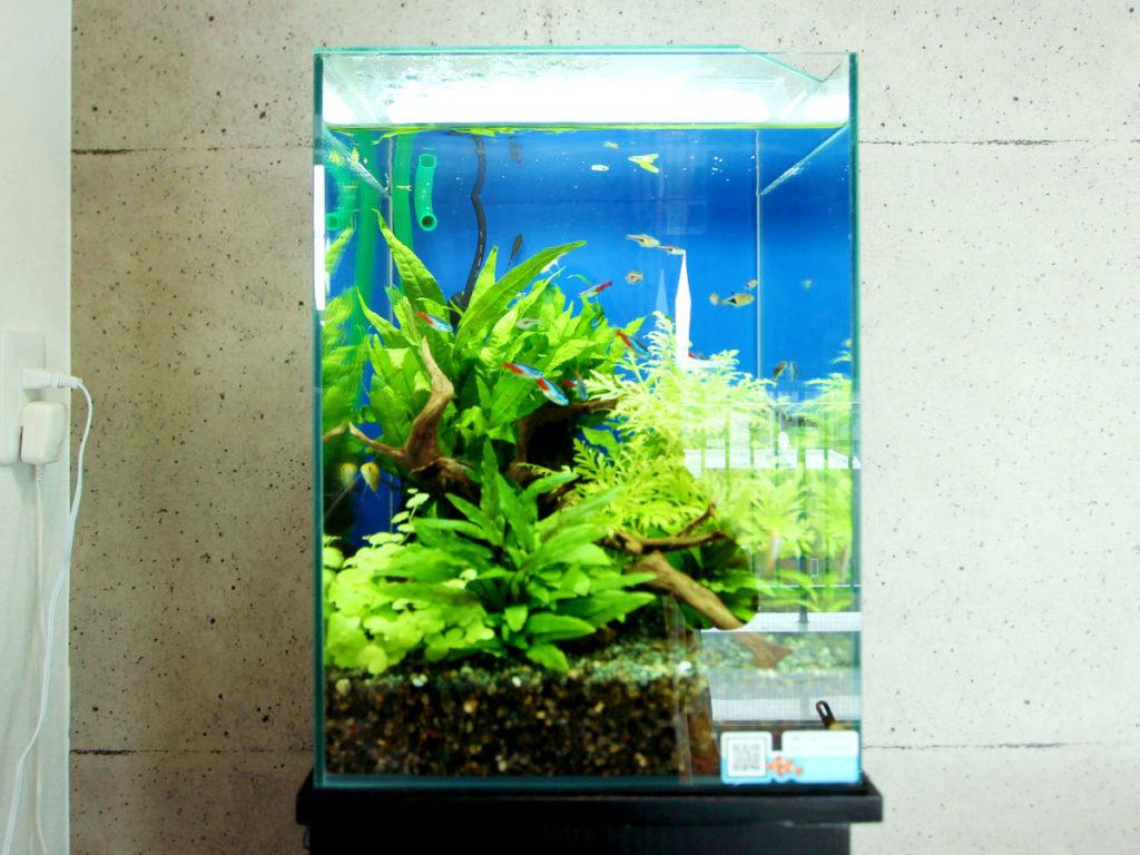 おすすめ人気の小型ろ過フィルター10選!30cm小型水槽でも安心!のサムネイル画像