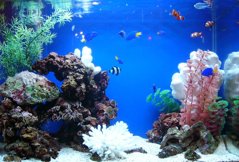 豊島区店舗様 エントランスに60cm海水魚水槽を設置 メイン画像