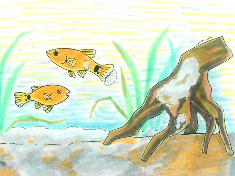 熱帯魚水槽に水カビや白カビが発生!その原因や撃退方法を教えます!のサムネイル画像