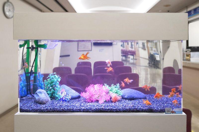 豊島区 病院の待合室 90cm金魚水槽 設置事例 水槽画像1