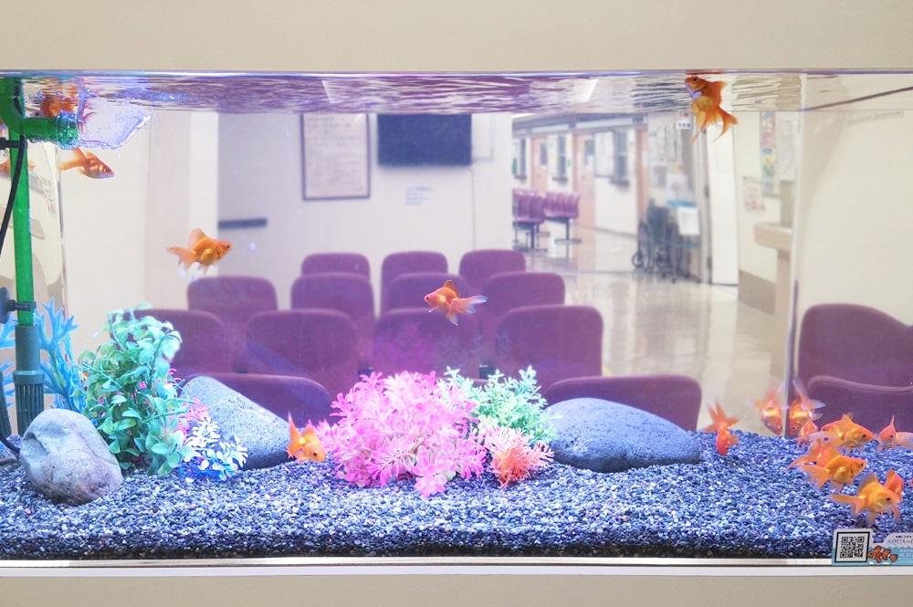病院の待合室 90cm金魚水槽 正面画像