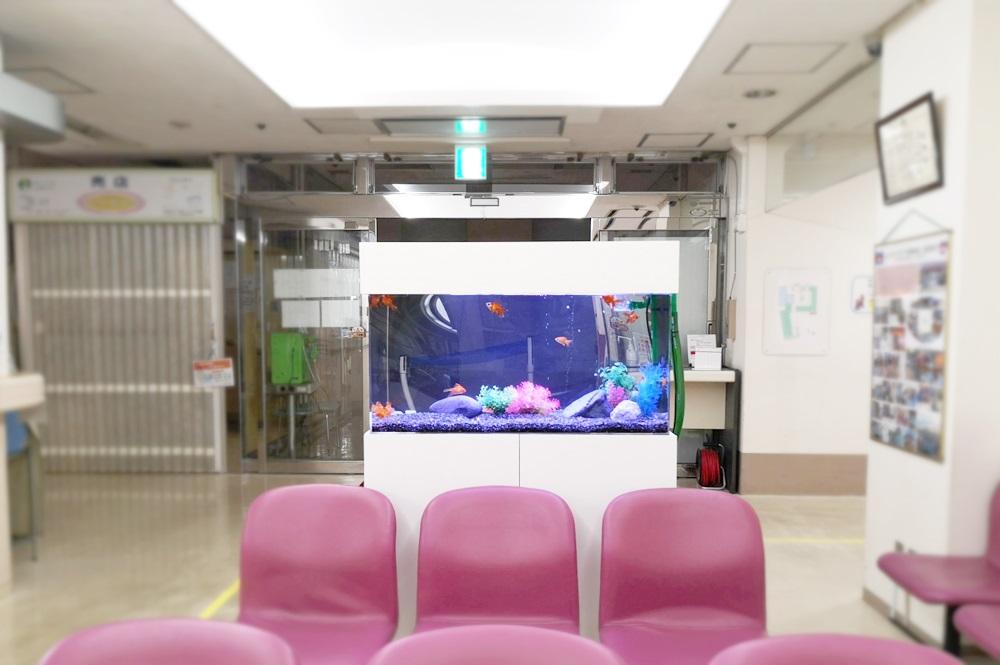 病院の待合室 90cm金魚水槽 正面アップ画像
